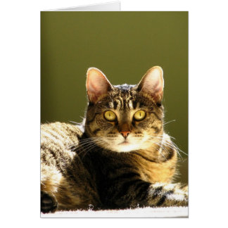 Cat In Sun Card