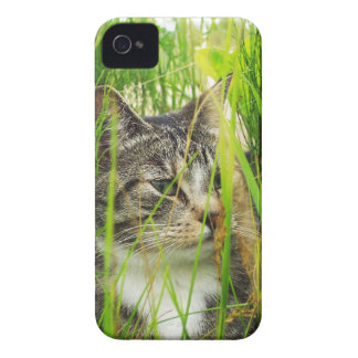 Cat in the Grass BlackBerry Bold Case