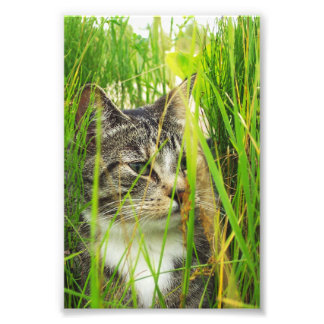 Cat in the Grass Photo