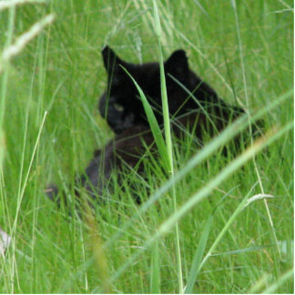 Cat In The Grass Cut Out