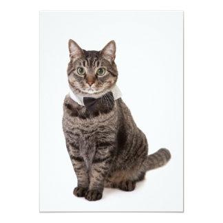 Cat in Tuxedo Card