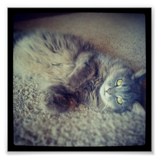 Cat-Instagram Posters