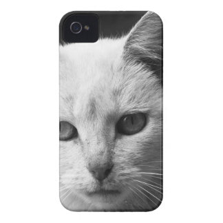 cat iPhone 4 covers
