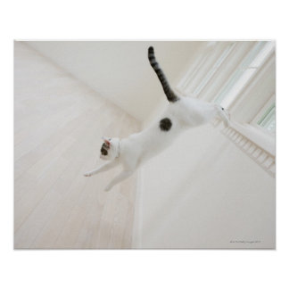 Cat jumping poster