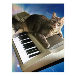 cat keyboard postcard