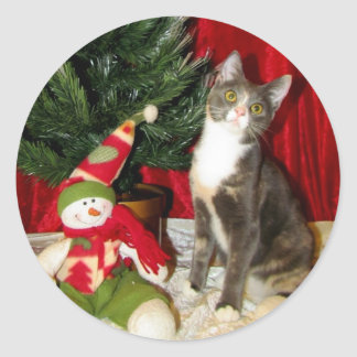 Cat, Kitten, Christmas, Rescue, Photo Classic Round Sticker
