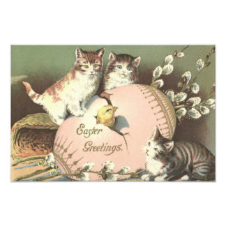 Cat Kitten Easter Colored Painted Egg Chick Photo Print