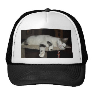 cat lazy day cap