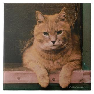 Cat Leans on Windowsill Ceramic Tile