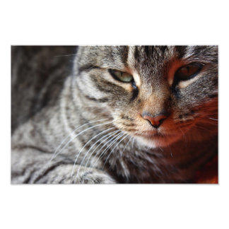 Cat Look Art Photo