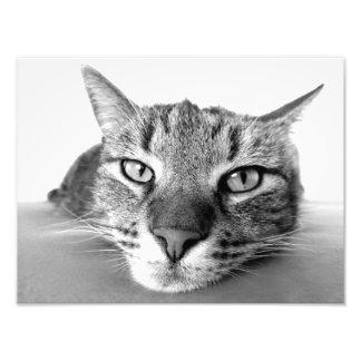 Cat look photo