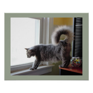 Cat Looking Out Window Poster