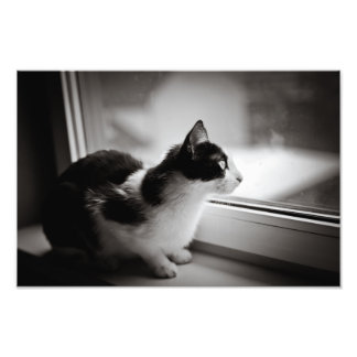 Cat looking outside photograph