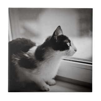 Cat looking outside small square tile