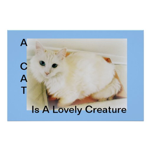 Cat...Lovely Creature Poster