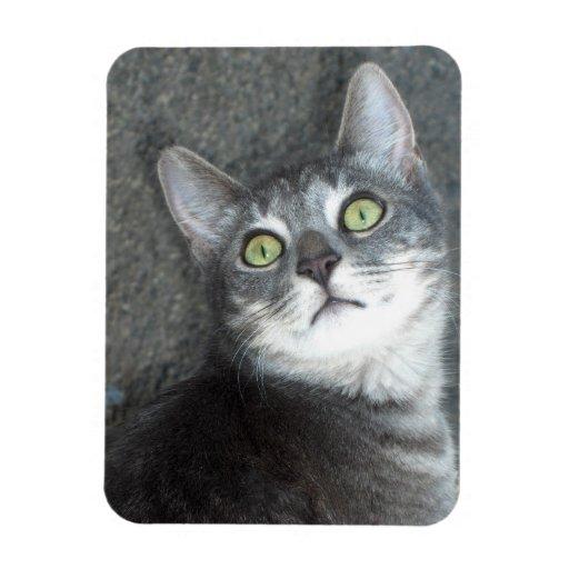 Cat Lovers Vinyl Magnet