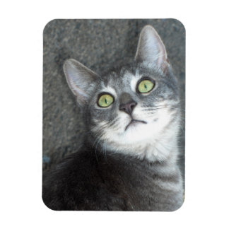 Cat Lovers Rectangular Photo Magnet