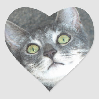 Cat Lovers Heart Stickers