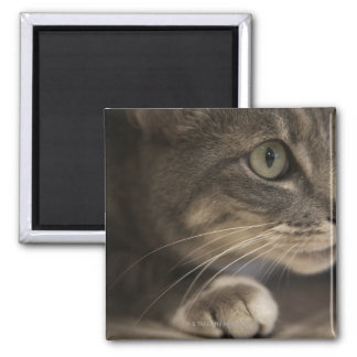 'Cat lying down, close-up (focus on cat's face)' Magnet