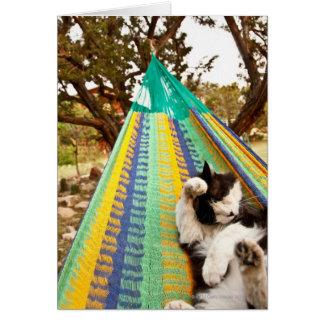 Cat lying in Mayan Mexican hammock Card