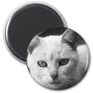 cat magnet
