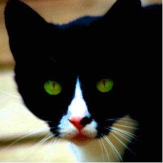 CAT Magnet Standing Photo Sculpture