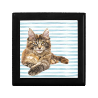 Cat, Maine Coon Gift Box