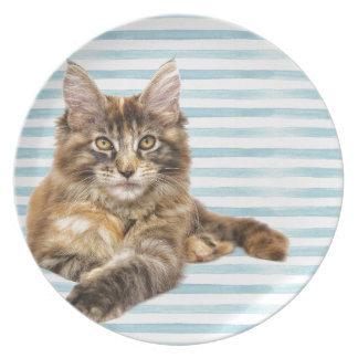 Cat, Maine Coon Plate