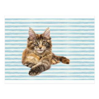 Cat, Maine Coon Postcard
