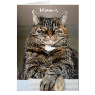 Cat Meow Sorry I was a Jerk Greeting Card