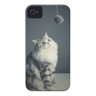 Cat mobile phone case for iphone & Samsung.