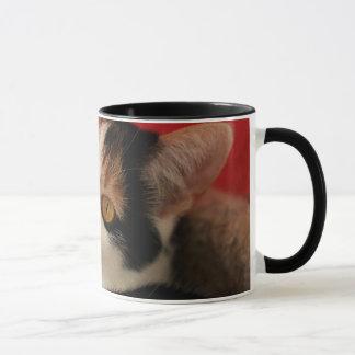 Cat Mug - World's Best Cat Mom