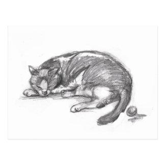Cat Nap Post Card
