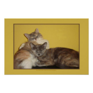 Cat Nappers Poster