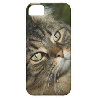 Cat Norwegian Forest Cat Sweet Domestic Cat Curiou iPhone 5 Covers