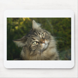Cat Norwegian Forest Cat Sweet Domestic Cat Curiou Mouse Pad