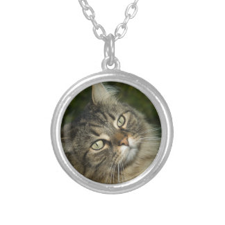 Cat Norwegian Forest Cat Sweet Domestic Cat Curiou Silver Plated Necklace