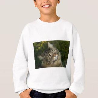 Cat Norwegian Forest Cat Sweet Domestic Cat Curiou Sweatshirt