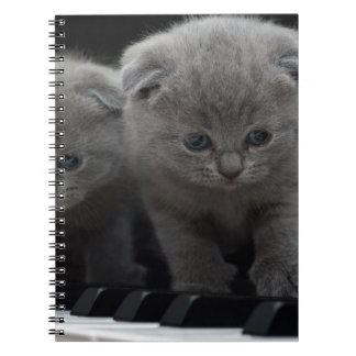 cat note book