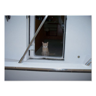 CAT ON A YACHT! POSTER