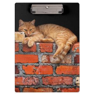 Cat on Brick Wall Clipboard