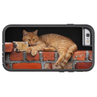 Cat on Brick Wall Tough Xtreme iPhone 6 Case