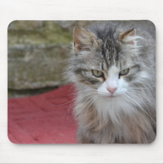 Cat on mouse PAD - photography