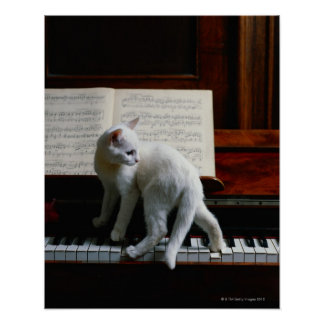 Cat on piano poster