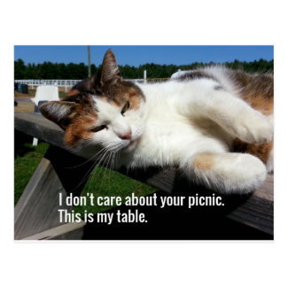 Cat On Picnic Table Postcard