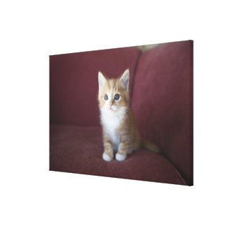 Cat on sofa stretched canvas print