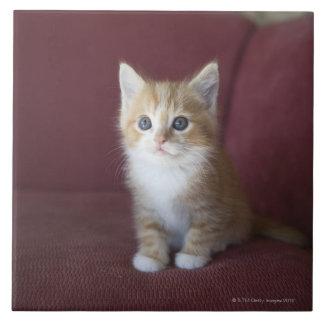 Cat on sofa large square tile