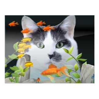 Cat Peering in Fish Tank Postcard