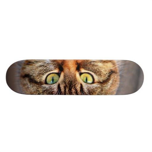 Cat Photo Skate Decks