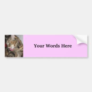 Cat photograph bumper sticker